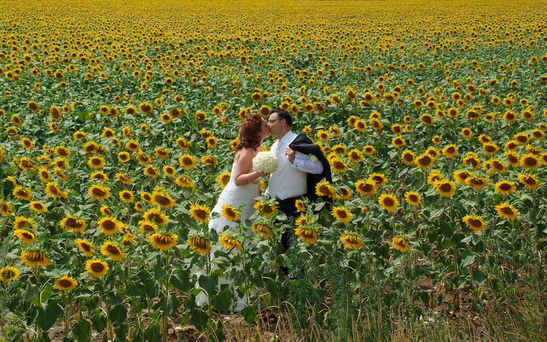 Napraforgók, búzatábla és a szerelmes pár